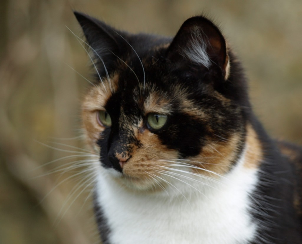 Our beautiful cat, Bramble, who we had to have put down today